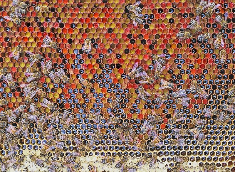 Пчелен прашец GHoney