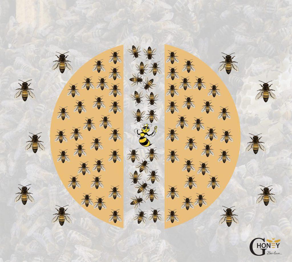 пчелите в кошера при температура 14 градуса