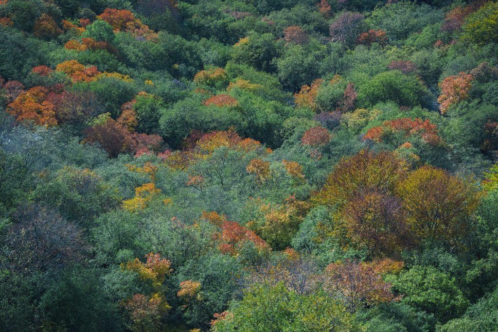 есен от високо в родопите