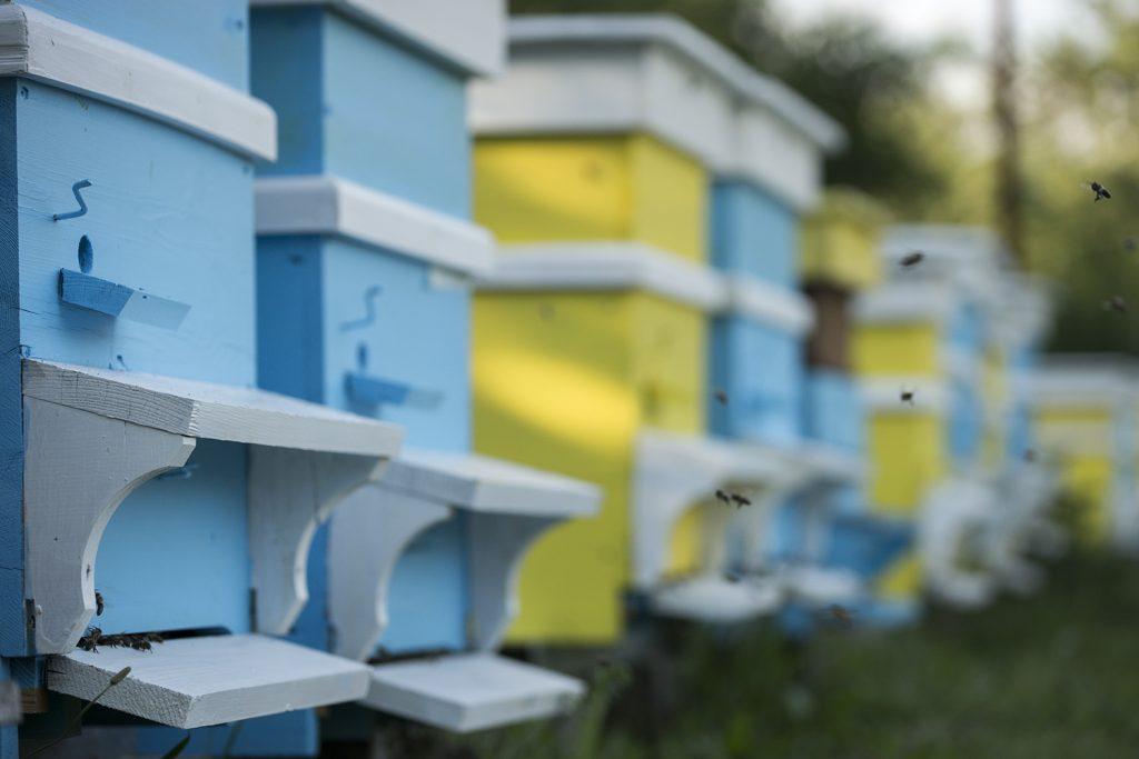 кошери на пчелина на GHoney