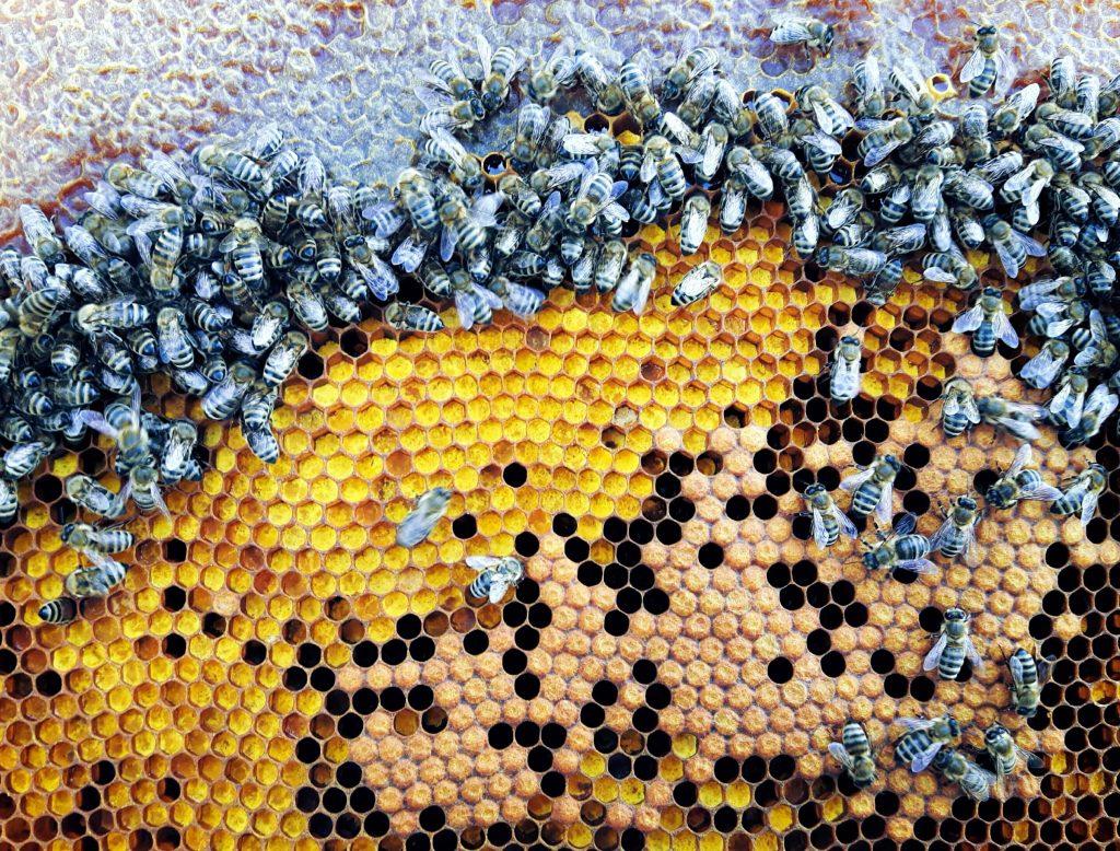Защо пчелен прашец?