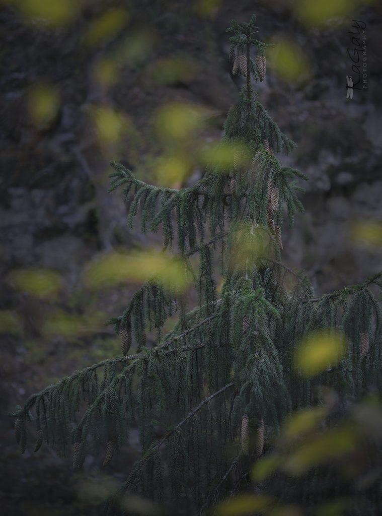 Есен от върха