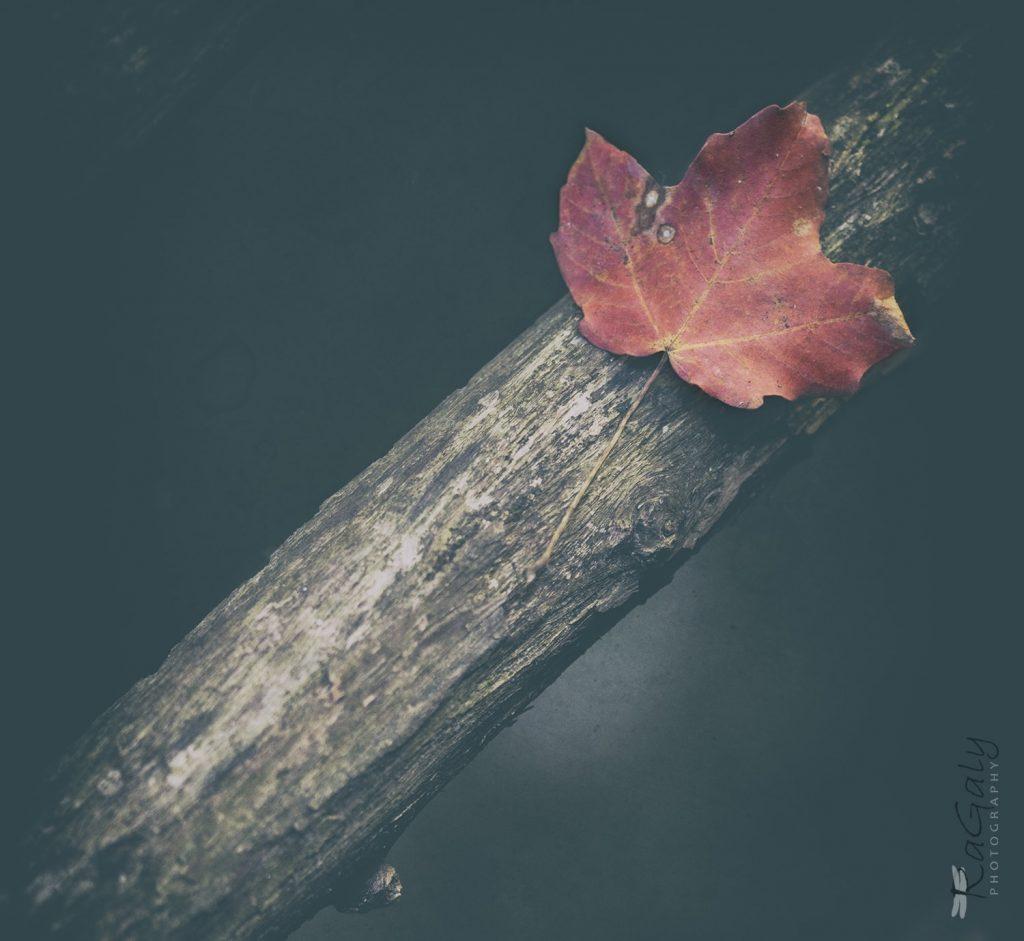 Портрет на есенно листо