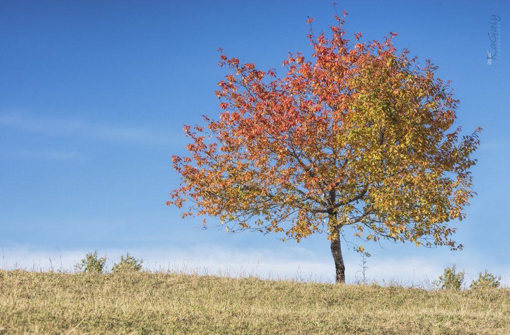 Есенно дърво в Родопите